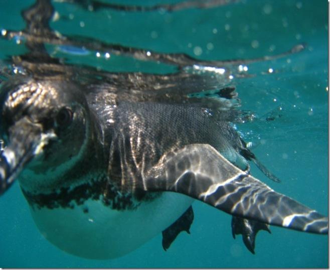 Isabela Snorkeling40b [800x600]