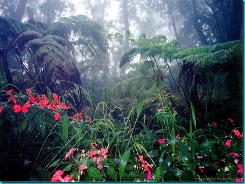 rain_forest11024x768
