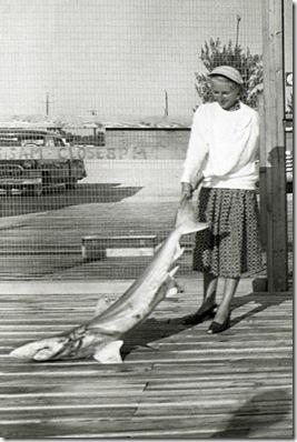 Mom-shark-_#4F11