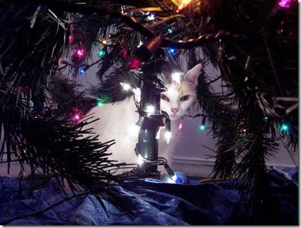 christmas cat 002
