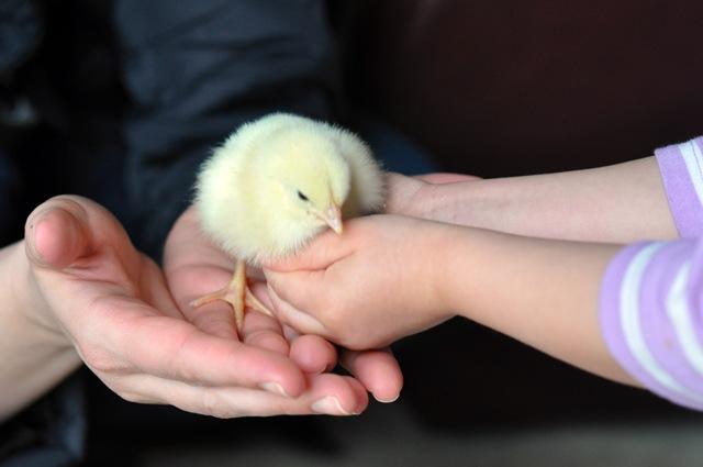 chicks kids march 2011 030