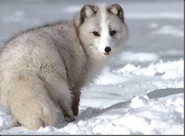 Excelentes fotografias de Animais (17)