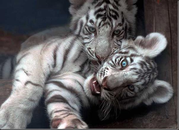 Excelentes fotografias de Animais (9)