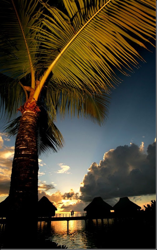 O Paraíso na Terra Bora Bora (7)