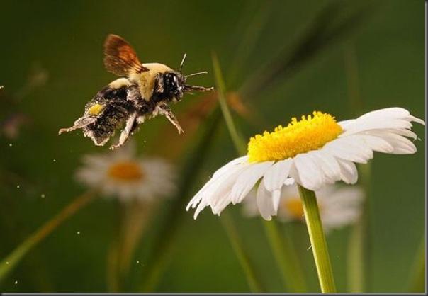 Belissimas fotos tiradas em alta velocidade (4)