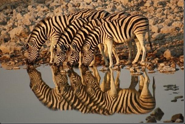 Belos exemplos de reflexões fotograticas (13)
