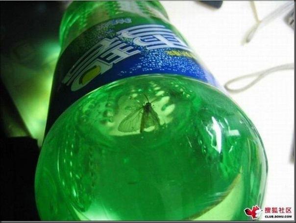Uma surpresinha no refrigerante (2)