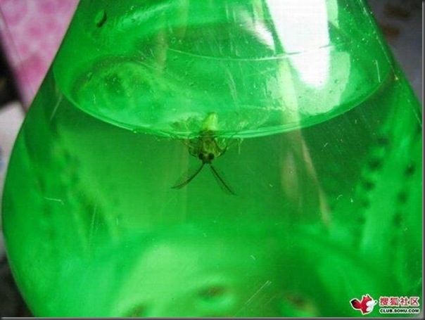 Uma surpresinha no refrigerante (5)