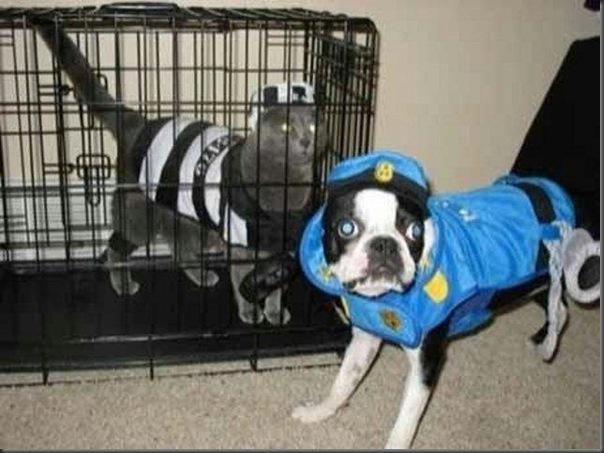 Cachorrinhos de roupinha (8)