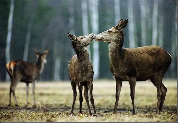 Lindas imagens de animais por Andris Eglitis (10)
