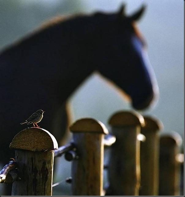 Lindas imagens de animais por Andris Eglitis (4)