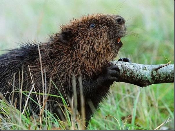 Lindas imagens de animais por Andris Eglitis (25)