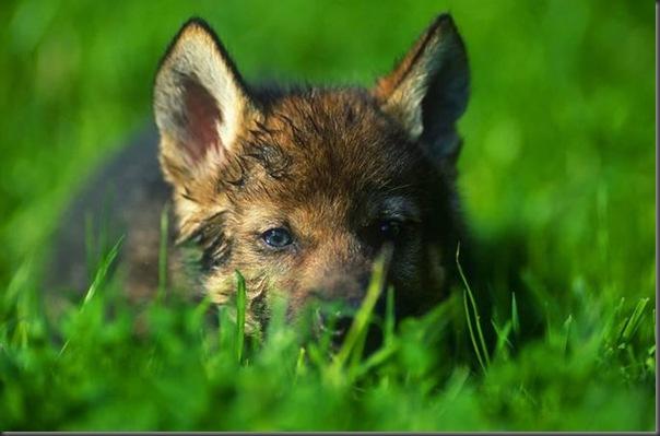Lindas imagens de animais por Andris Eglitis (21)