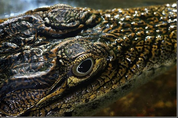 Lindas imagens de animais por Andris Eglitis (22)