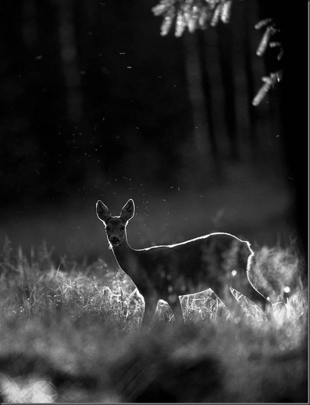 Lindas imagens de animais por Andris Eglitis (1)