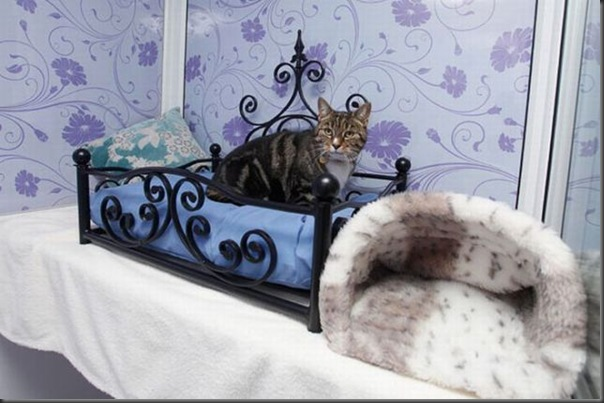 Hotel 5 estrala para gatos