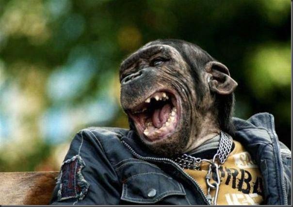 O sorriso dos animais (11)