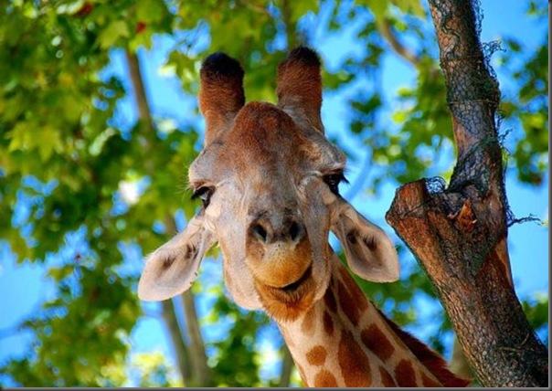O sorriso dos animais (2)