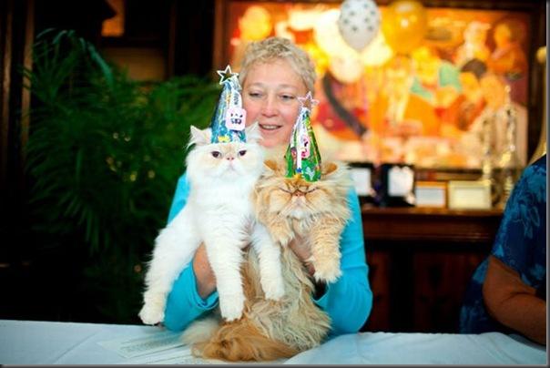 Desfile de moda de gatos (12)