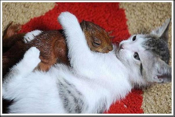 Gatos adoram um esquilo (5)