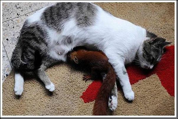 Gatos adoram um esquilo (4)