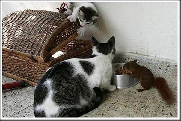 Gatos adoram um esquilo (9)