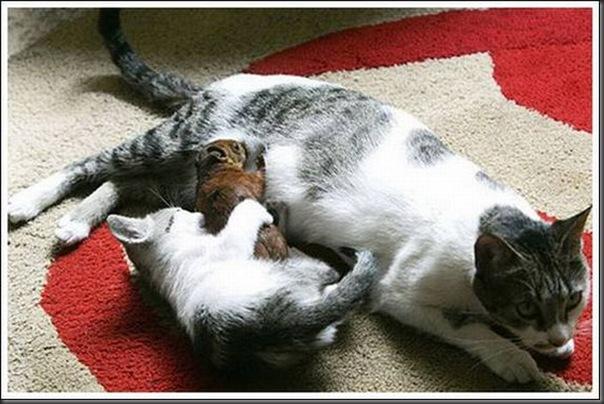Gatos adoram um esquilo (1)