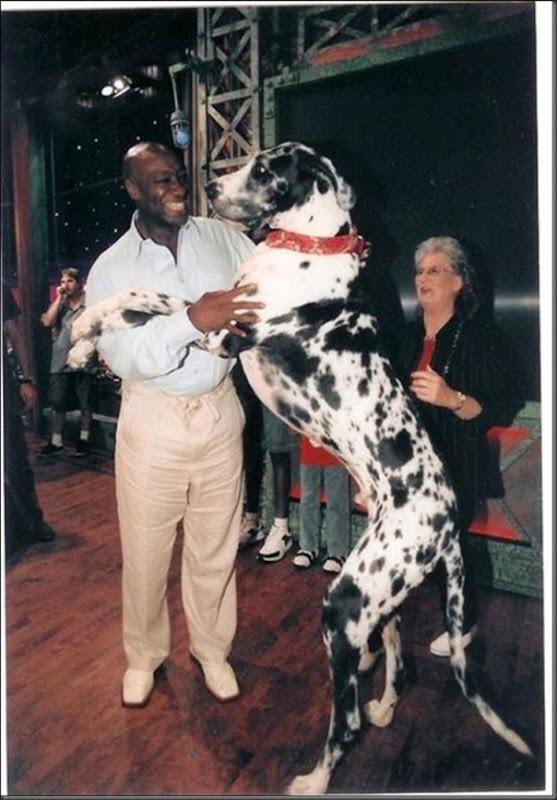 Cachorros gigantes (9)