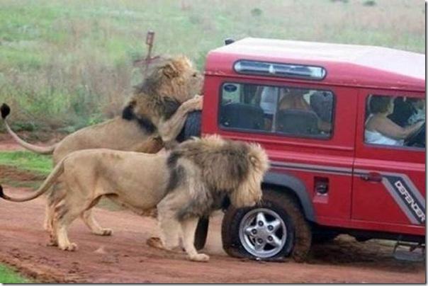 Quem vai trocar o pneu do carro