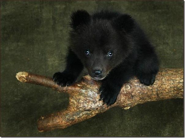 Ursinhos carinhosos (13)