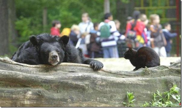 Ursinhos carinhosos (6)