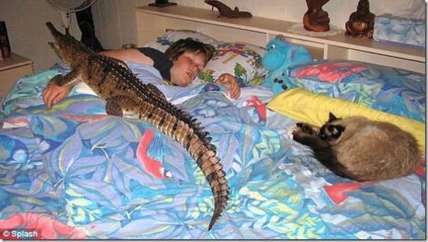Animal de estimação perigoso (2)