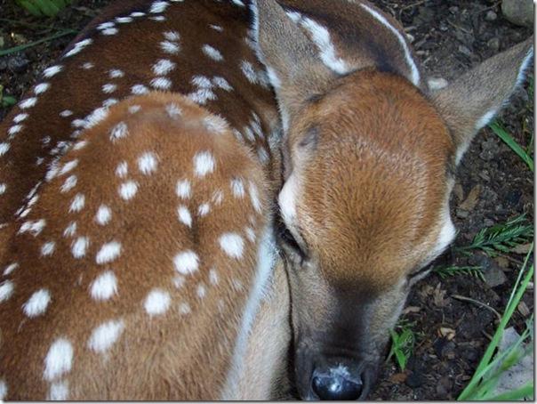 Adoráveis animais dormindo (15)