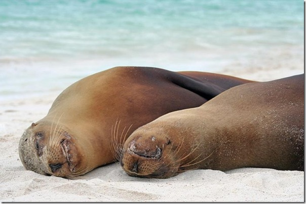 Adoráveis animais dormindo (10)