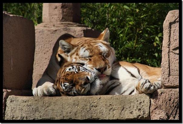 Adoráveis animais dormindo (6)
