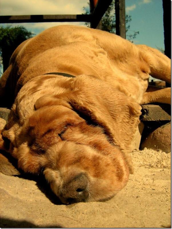 Adoráveis animais dormindo (5)