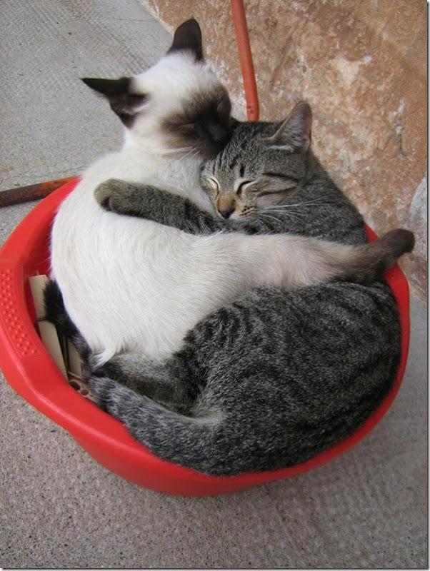 Adoráveis animais dormindo (2)