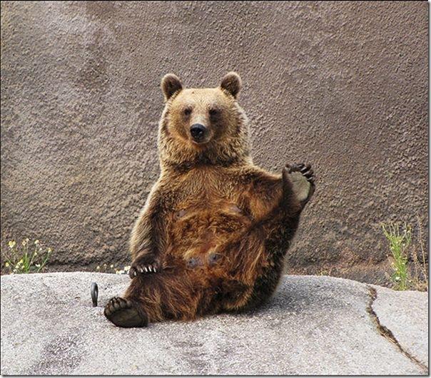 Urso praticando Yoga (2)