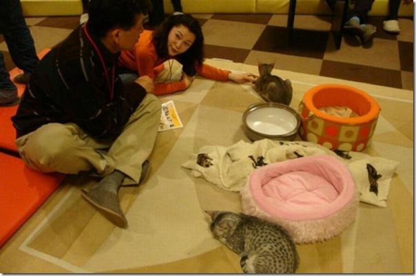 Tóquio gato café (43)