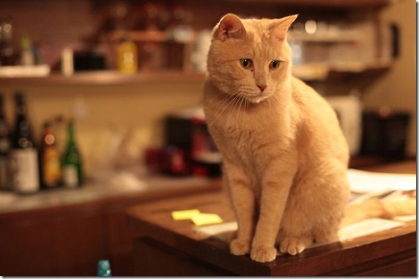 Tóquio gato café (32)