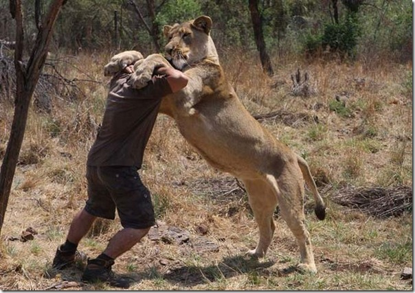 Kevin Richardson, O encantador de leões (7)