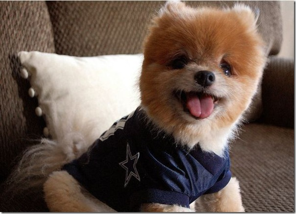 Cachorrinho mais fofo do mundo (6)