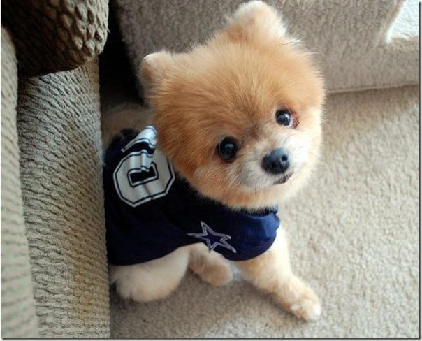Cachorrinho mais fofo do mundo (7)