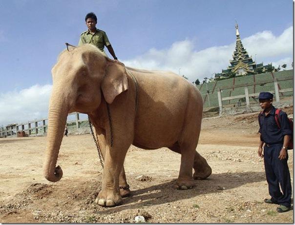 Elefante branco (1)