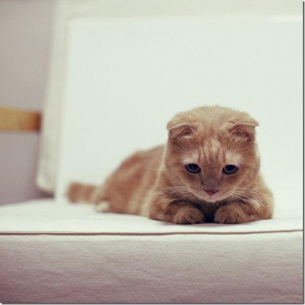 Gatinhos fofinhos (28)