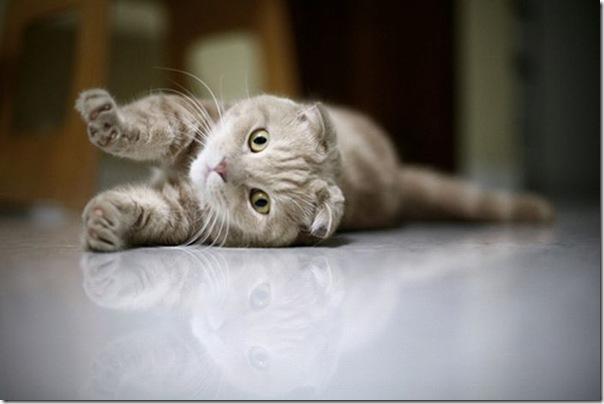 Gatinhos fofinhos (8)