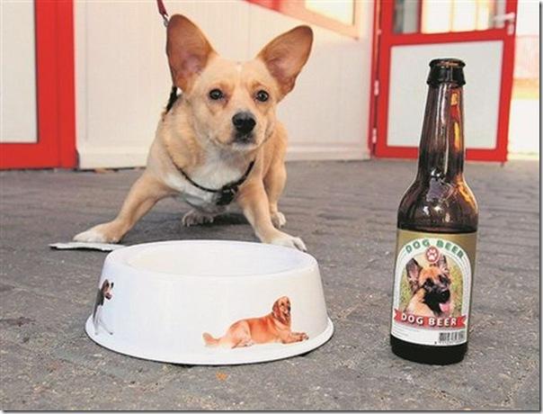 cerveja para cachorro, também desse redondo