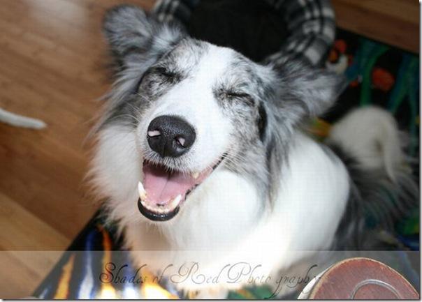 Cães drogados (13)