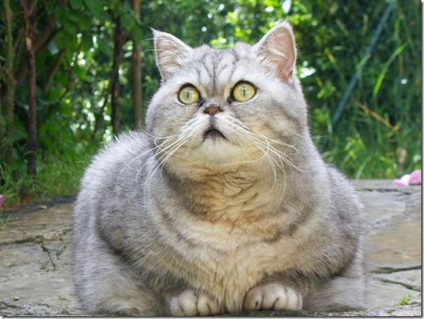 Giuly a gata gorda que ficou famoso na internet (16)