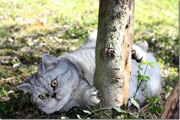 Giuly a gata gorda que ficou famoso na internet (12)